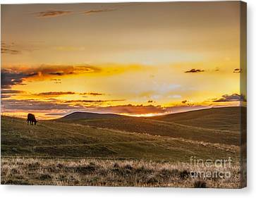 Grazing Sunset Canvas Print
