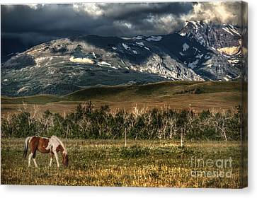 Grazing The Cutback Canvas Print by The Stone Age