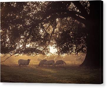 Grazing Under The Tree Canvas Print by Chris Fletcher