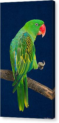 Canvas Print featuring the photograph Great-billed Parrot 1 by Avian Resources