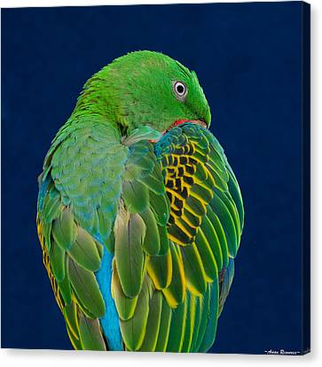 Canvas Print featuring the photograph Great-billed Parrot 2 by Avian Resources