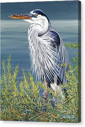 Great Blue Canvas Print by Danielle  Perry