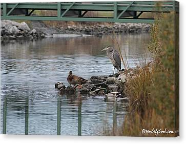 Great Blue Heron And Friends Canvas Print by Robert Banach