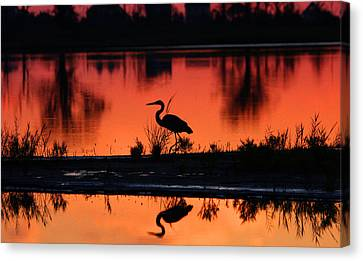 Great Blue Heron At Sunrise Canvas Print by Allan Levin
