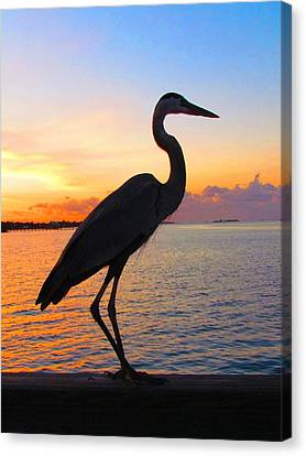 Great Blue Heron Canvas Print - Great Blue Heron At Sunset by Carol R Montoya