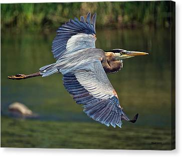 D700 Canvas Print - Great Blue Heron At The South Platte River by Stephen  Johnson