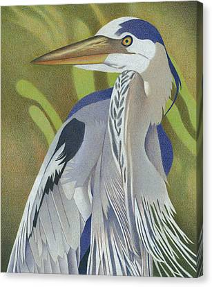 Willow Lake Canvas Print - Great Blue Heron by Dan Miller