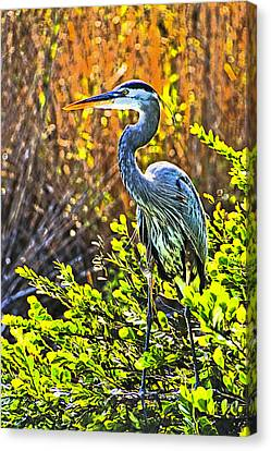 Great Blue Heron Canvas Print by Dennis Cox WorldViews