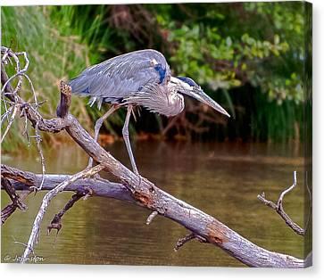 Great Blue Heron Oak Creek Canyon Sedona Arizona Canvas Print by Bob and Nadine Johnston