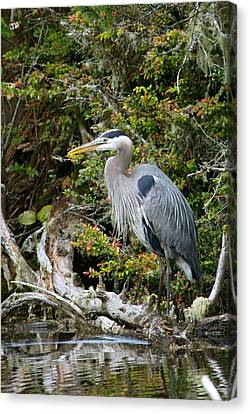 Great Blue Heron On Log Canvas Print by Randall Ingalls