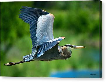 D700 Canvas Print - Great Blue Heron On The Platte by Stephen  Johnson