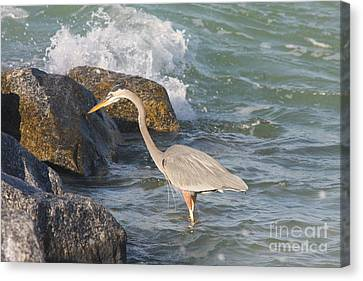 Canvas Print featuring the photograph Great Blue Heron On The Prey by Christiane Schulze Art And Photography