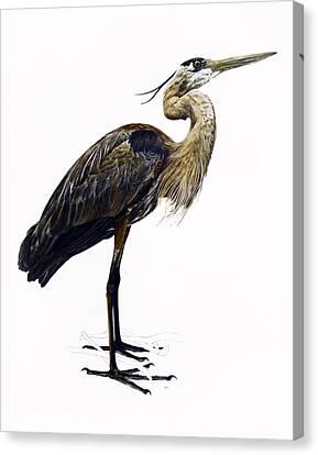 Great Blue Heron Canvas Print by Rachel Root
