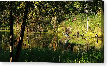Great Blue Heron Reflecting Canvas Print by James Hammen