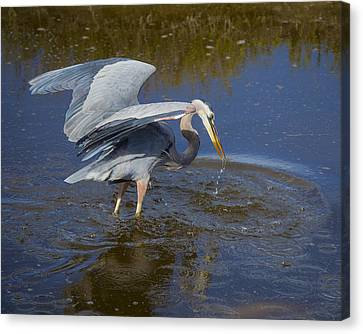Great Blue Heron South Padre Island Wetlands Canvas Print by TN Fairey