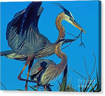 Canvas Print featuring the photograph Great Blue Herons - Nest Building by Larry Nieland