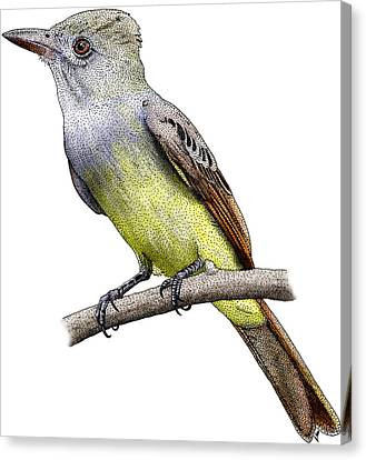 Great Crested Flycatcher Canvas Print by Roger Hall