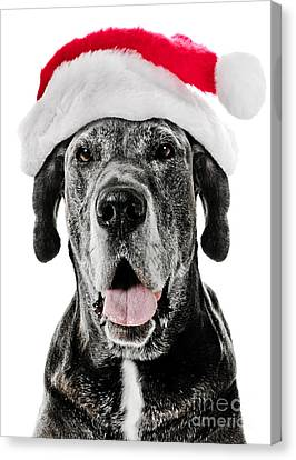Doggy Cards Canvas Print - Great Dane Santa by Jt PhotoDesign