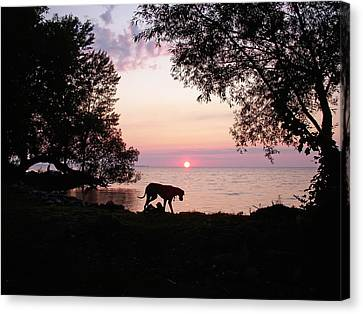 Canvas Print featuring the photograph Great Dane Sunset by Aimee L Maher Photography and Art Visit ALMGallerydotcom