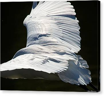Great Egret Canvas Print by Avian Resources