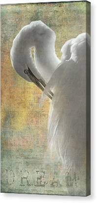 Great Egret Dream Canvas Print by Angie Vogel