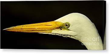 Great Egret Head Canvas Print by Robert Frederick