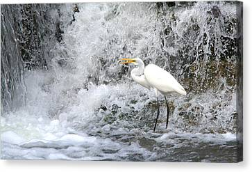 Great Egret Hunting At Waterfall Series 1 Canvas Print