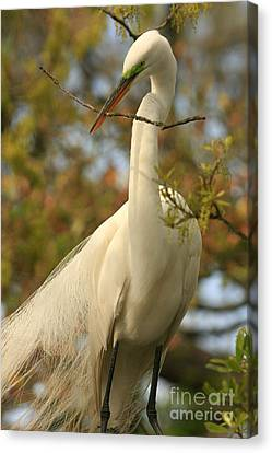 Great Egret Impressions Canvas Print