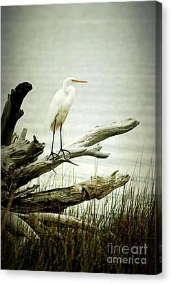 Great Egret On A Fallen Tree Canvas Print by Joan McCool