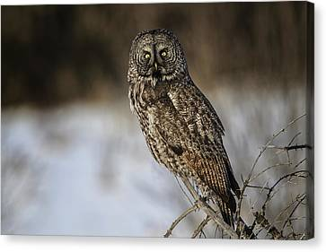 Great Gray Owl 2 Canvas Print by Gary Hall
