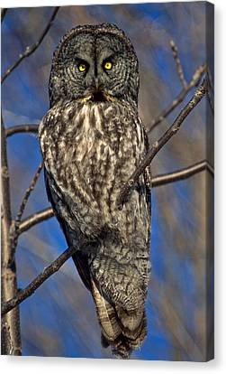 Great Grey Owl Canvas Print by Michael Hubley