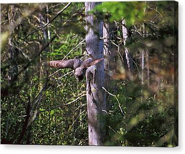 Canvas Print featuring the photograph Great Grey Owl Pounces  by David Porteus