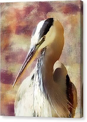Great Heron Portrait Canvas Print