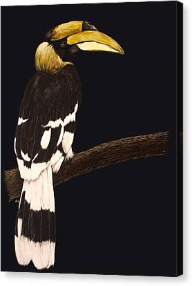 Great Hornbill Canvas Print by Heather Ward