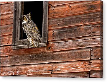 Great Horned Canvas Print