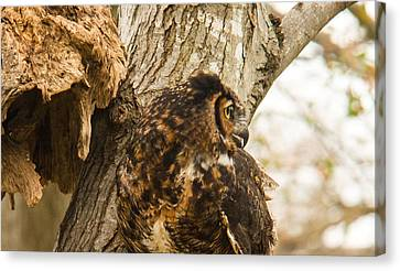 Tennessee Canvas Print - Great Horned Owl 15 by Douglas Barnett