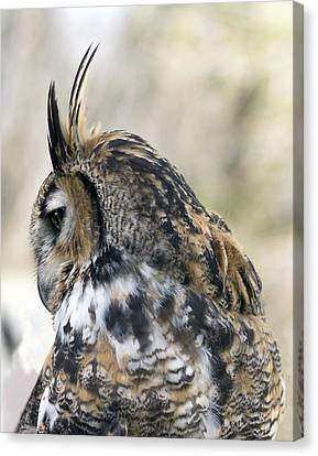 Great Horned Owl Canvas Print by Dana Moyer