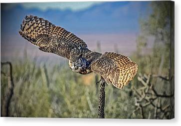 Canvas Print featuring the mixed media Great Horned Owl by Elaine Malott