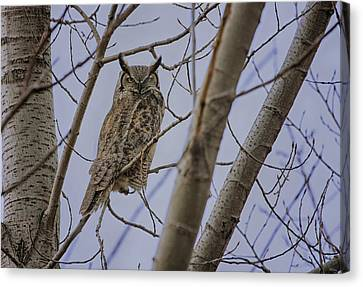 Great Horned Owl Canvas Print by Gary Hall