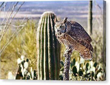 Kathleen Canvas Print - Great Horned Owl Hunting by Kathleen Bishop