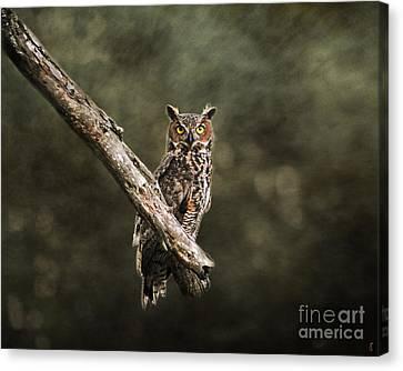 Great Horned Owl I Canvas Print by Jai Johnson
