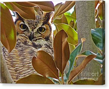 Canvas Print featuring the photograph Great Horned Owl by Meghan at FireBonnet Art
