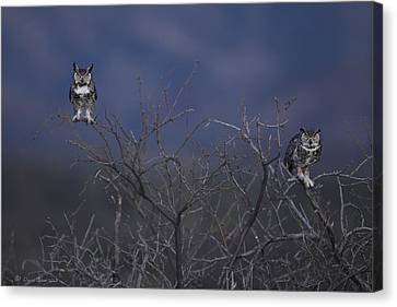 Great Horned Owl Pair At Twilight Canvas Print by Daniel Behm
