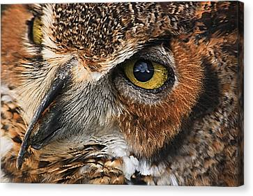 Canvas Print featuring the photograph Great Horned Owl by Tammy Schneider