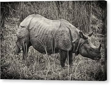 Great Indian Rhino  Canvas Print