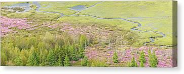 Great Meadow Flowers Blooming In Acadia National Park Canvas Print