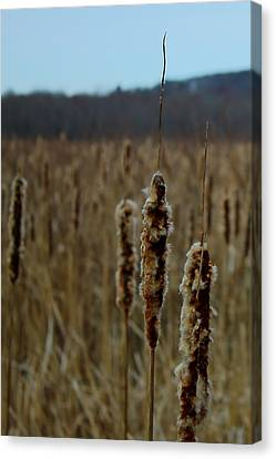 Great Meadows Canvas Print