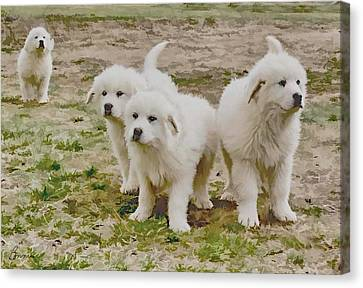 Great Pyranese Puppies Canvas Print by Bonnie Willis
