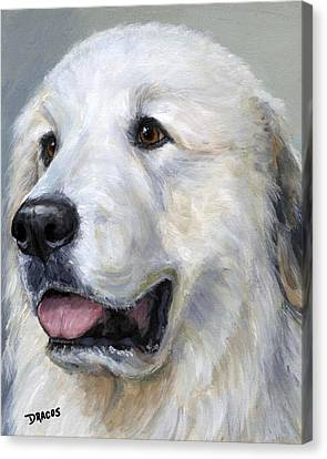 Great Pyrenees On Grey Canvas Print by Dottie Dracos