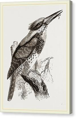 Great Senegal Kingfisher Canvas Print by Litz Collection